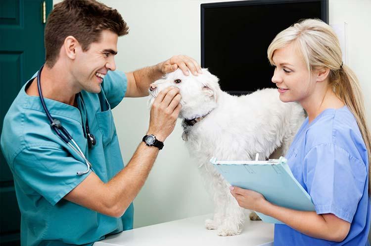 Cursos y formación veterinaria